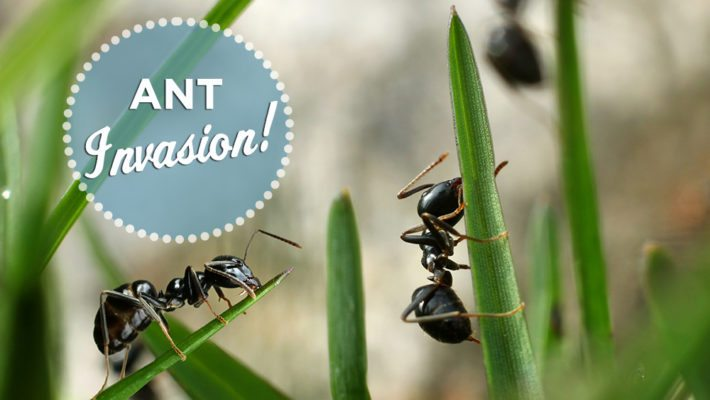Fire Ants, Carpenter Ants, and Flying Ants, OH MY!