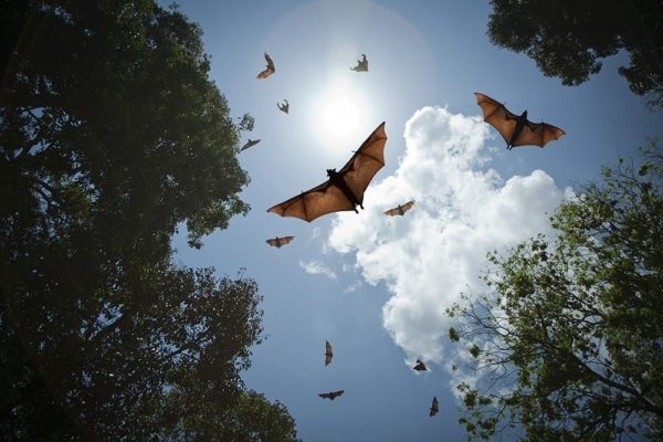 Bats in the Belfry: How to get them out!