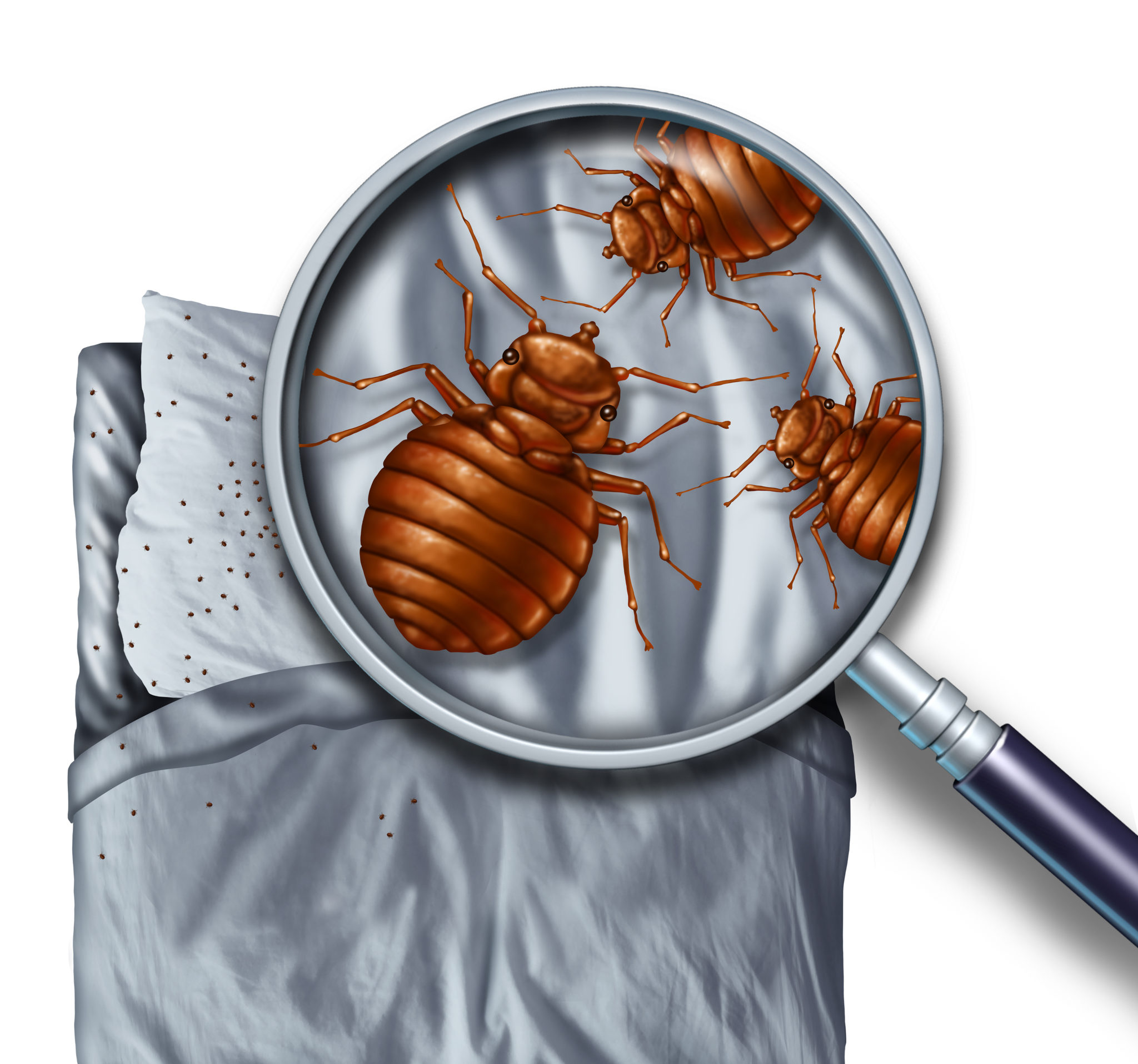 Illustration of bed bugs on a bed viewed through a magnifying glass