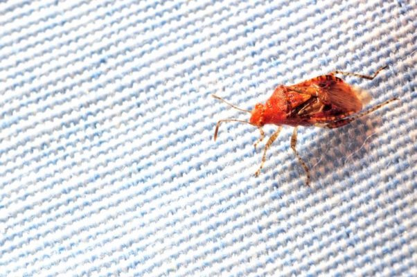 Modern pest blog page 15 of 27 modern pest for Bed bugs boston