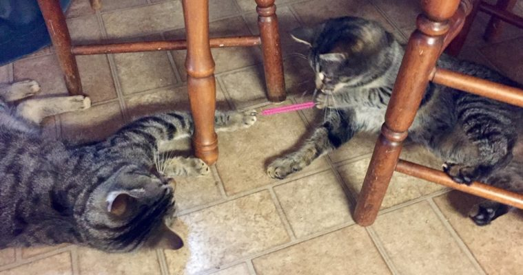 Cats with elastic