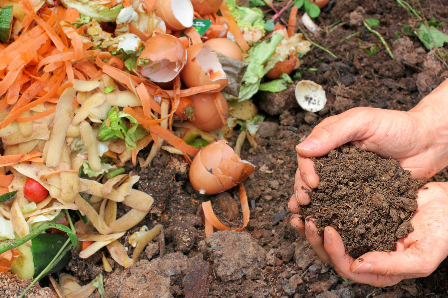 Controlling Pests in Compost - Keep Animals Out of Compost Piles ...