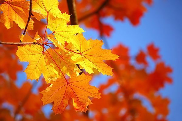 Raking Leaves… For Pest Control?