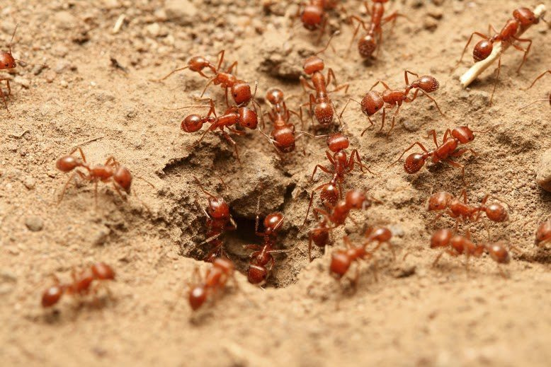 Fire ant identification for pest control in ME, MA, and NH