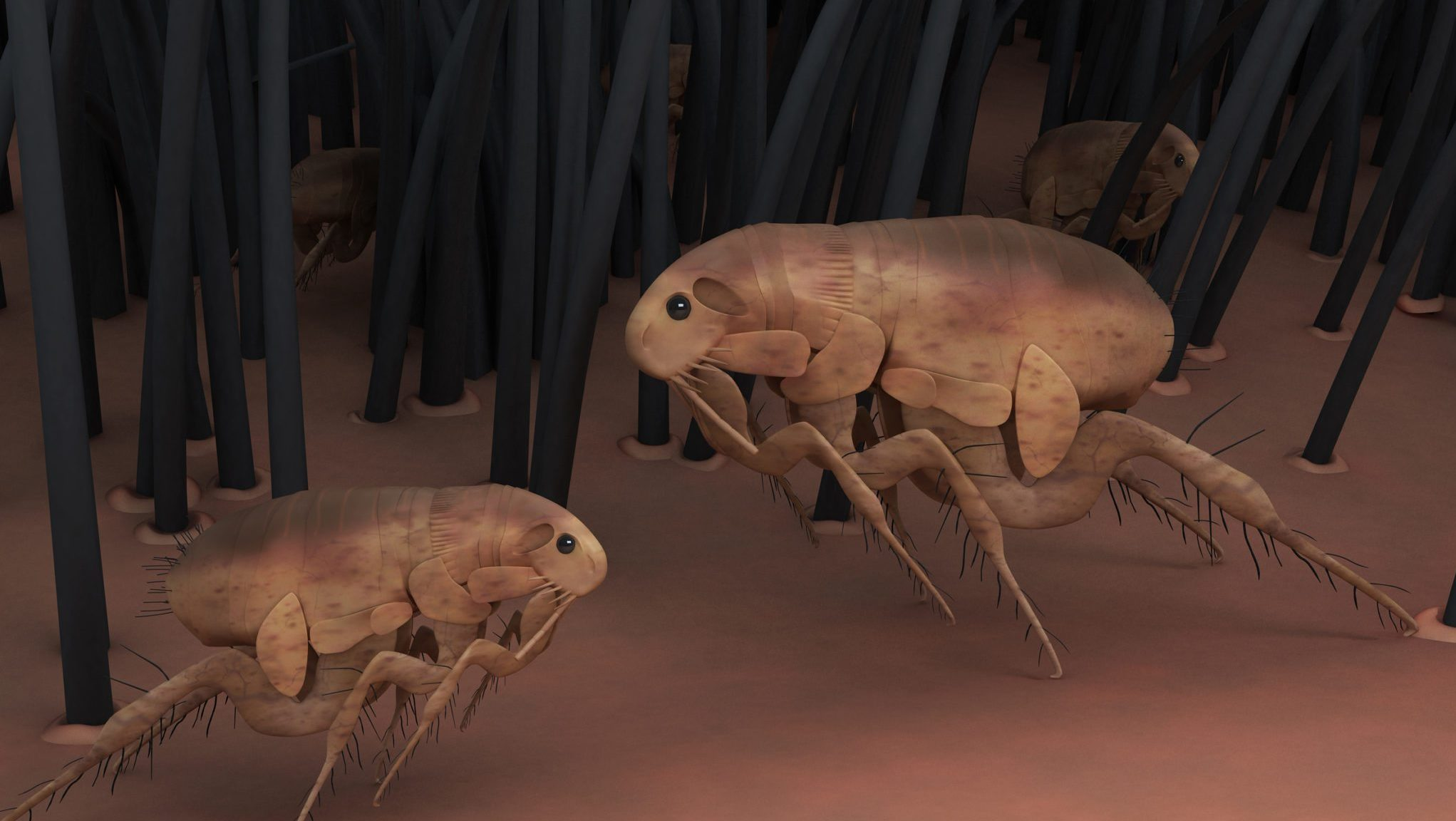 3D rendering of animal fleas