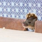 get-proactive-house-mice