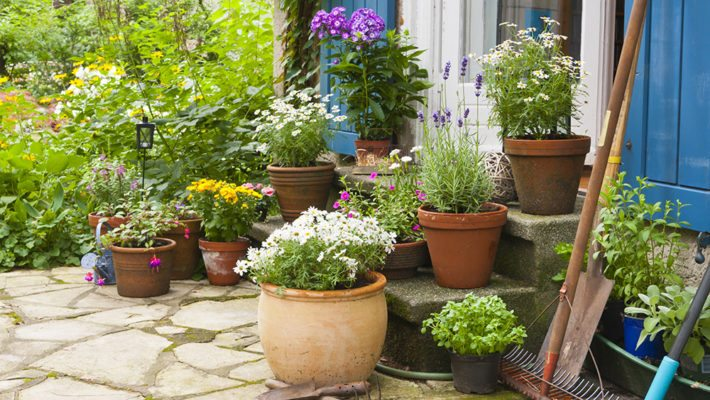 Is Your Landscaping Attracting Pests to Your Home?