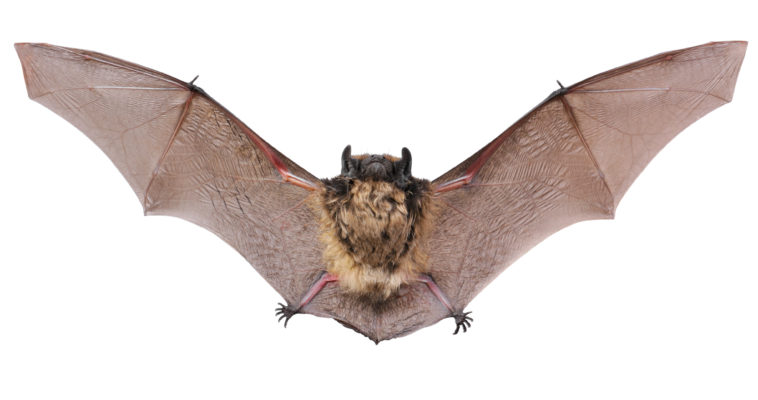 When is the Right Time for Bat Exclusion?