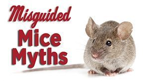Mice Myths vs. Facts