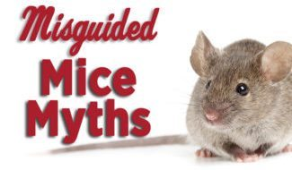 Mice Myths