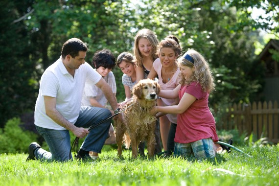 People Petting Dog on Green Grass