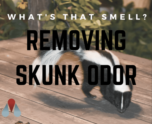 What's That Smell? Removing Skunk Odor