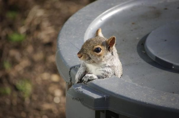 Keep Out the Riff-Raff: Prevent Nuisance Wildlife in Your Home