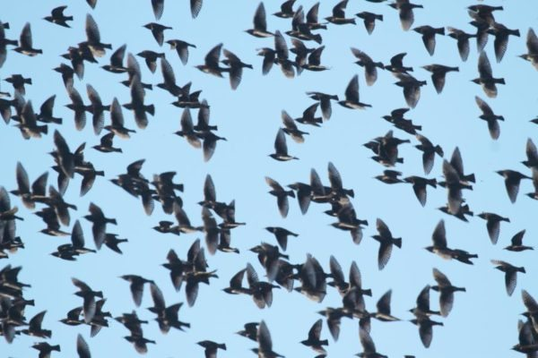 Signs that It's Time for Serious Bird Control