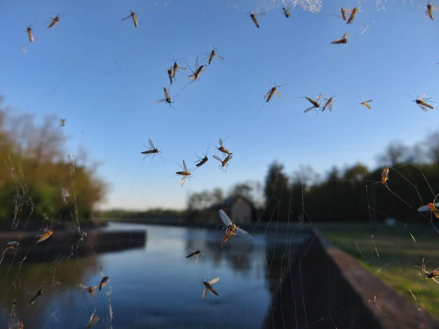 These swarms of mosquitoes are one of the many pests arriving for spring.