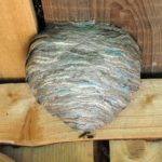 wasp-nest-14553484_l