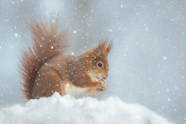 Does Harsh Winter Weather Send Pests Inside Your Home?