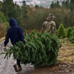Carrying Fresh Cut Christmas Tree