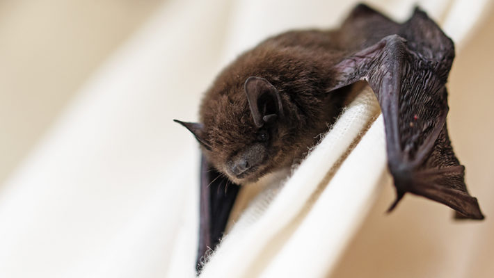 Selecting the Best Bat Removal Professional