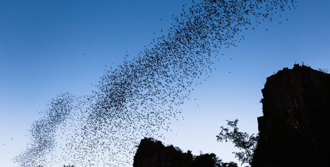 Bats: Menacing or Misunderstood?