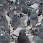 Protect your home against bird infestation
