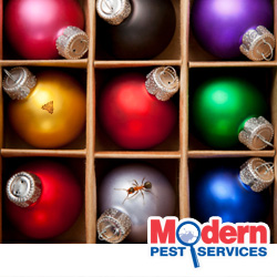 Holiday Pests Problems In New England