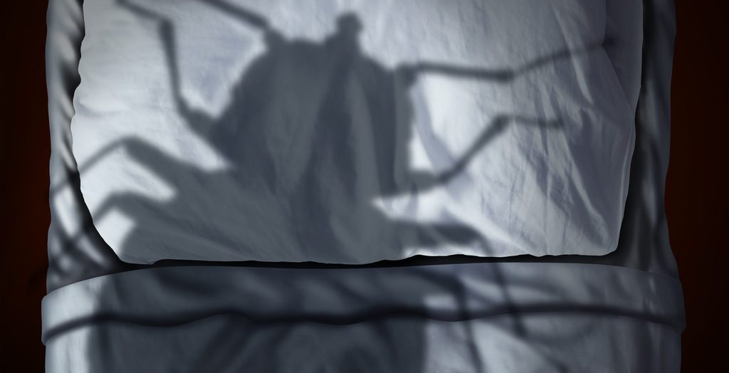 Monster shadow of bed bugs