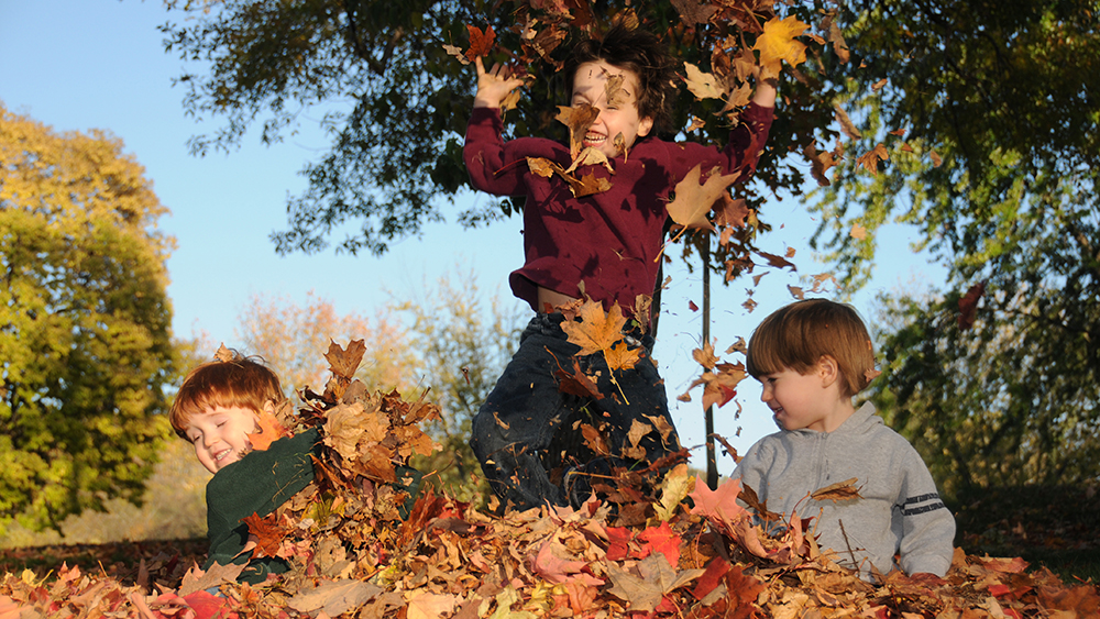 Kids in leaf pile