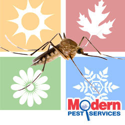 Mosquito Season Is The 5th Season In Maine