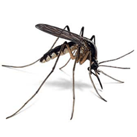 Mosquito identification for pest control in MA, ME, and NH