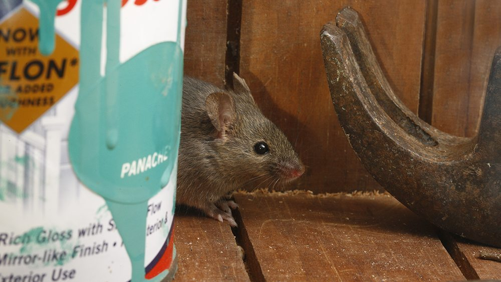 Mouse in shed - how to keep them out