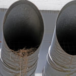 bird´s nest in ventilation pipe