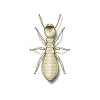 Termite identification for pest control in ME, MA, and NH