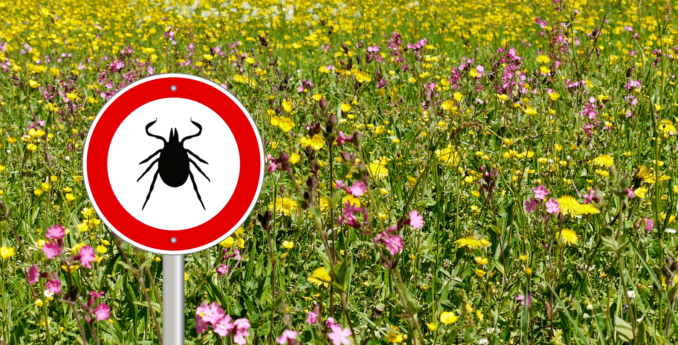 Tick Prevention & Removal
