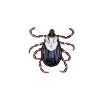 Tick identification for pest control in ME, MA, and NH