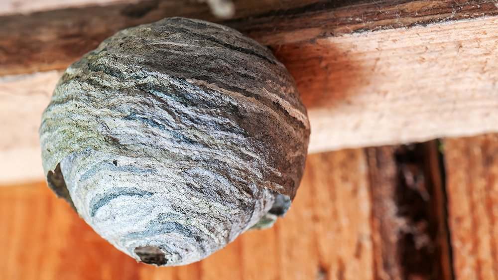 round hornets nest hanging on the wooden board