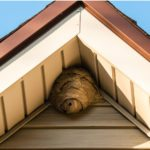 Wasp nest under an eave