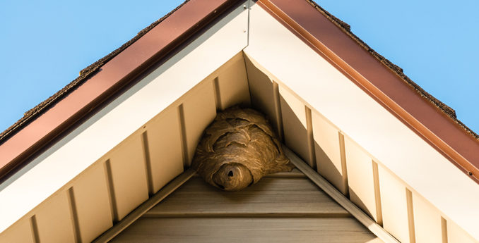 The Do's and Don'ts of DIY Wasp Control