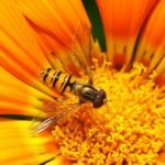 selective focus, bee collecting pollen from flower