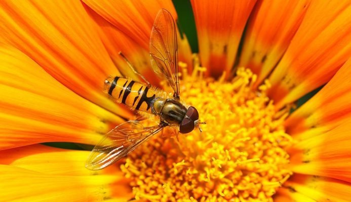 Five Facts About Wasps
